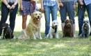 Dogs Depositphotos 78452896 Original